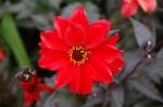 Wallington - flower
