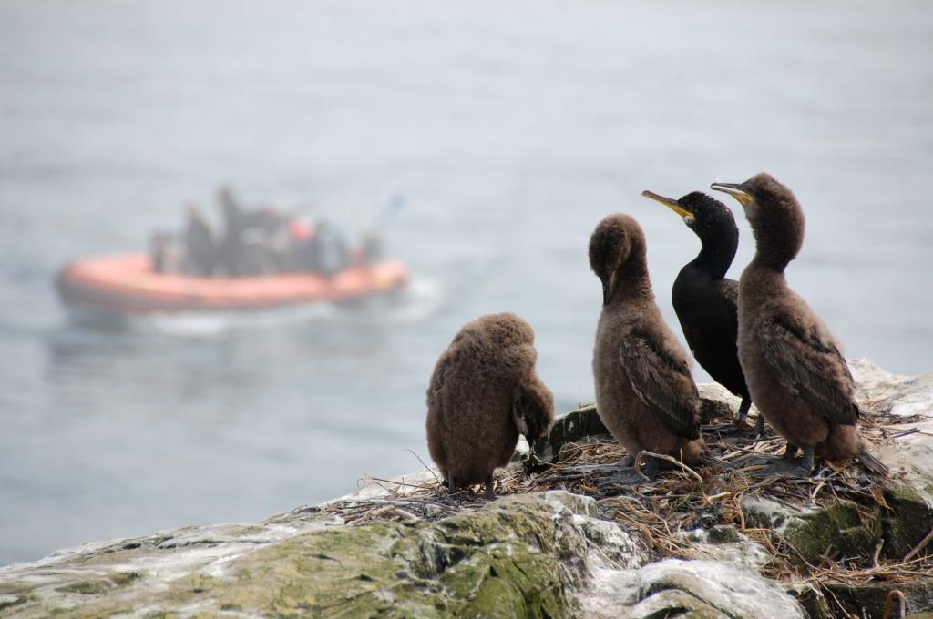 Foggy Farnes with sea birds