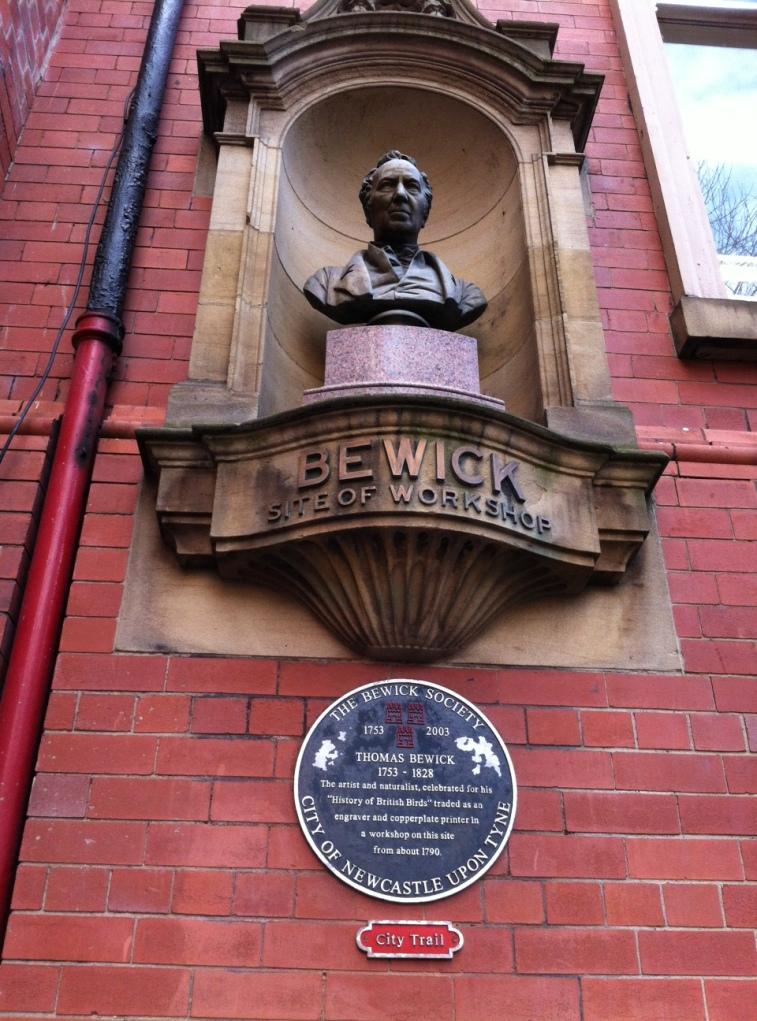 Bewick bust