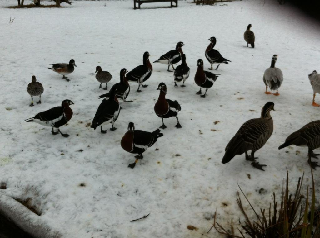 Birds at Washington Wetlands Centre