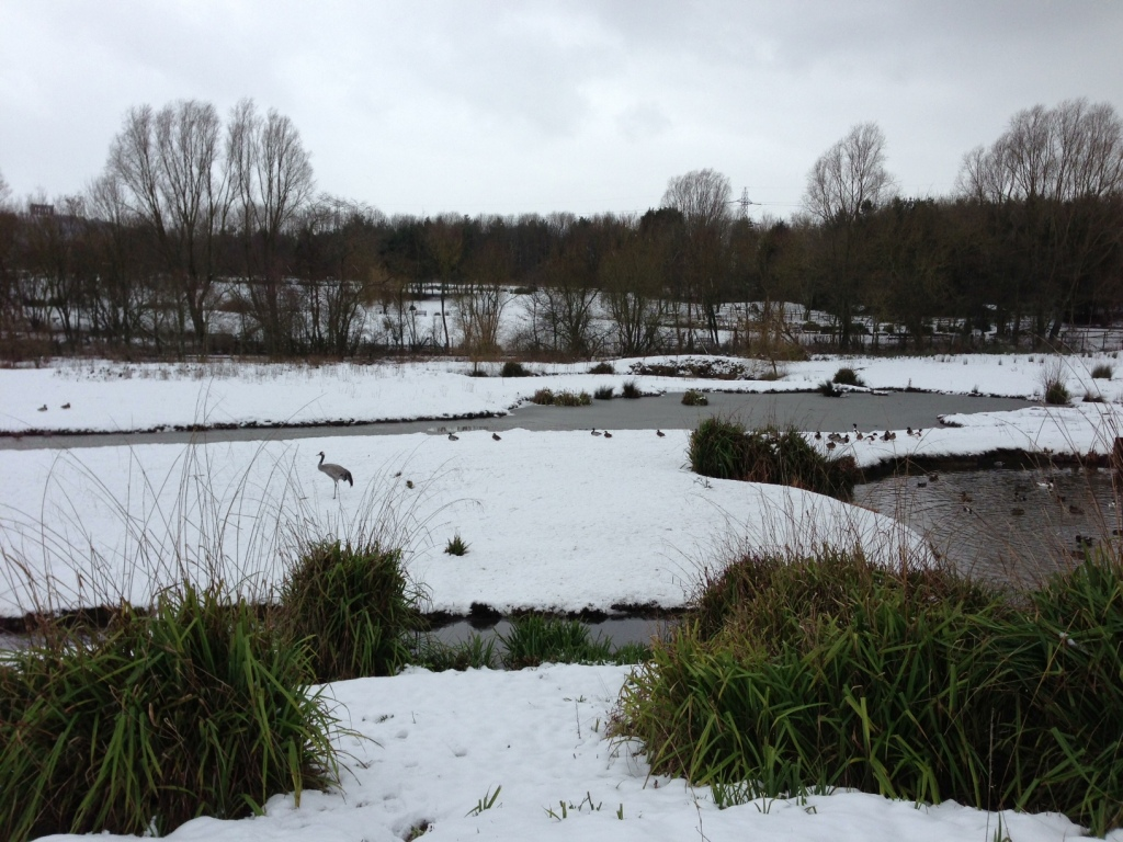 Washington Wildfowl Centre in winter