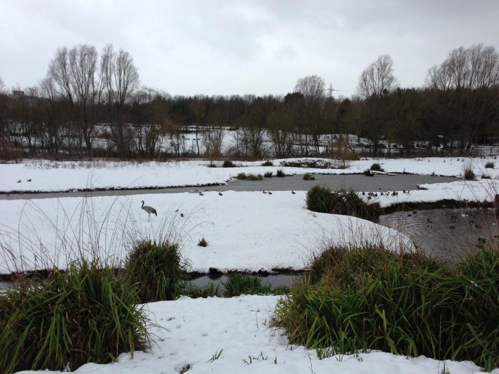 Washington Wildfowl Centre in winter