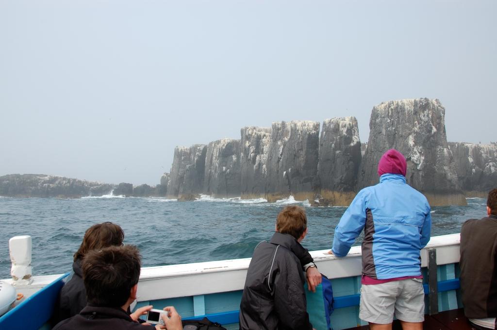 Farne Islands boat trip