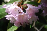 Belsay flowers
