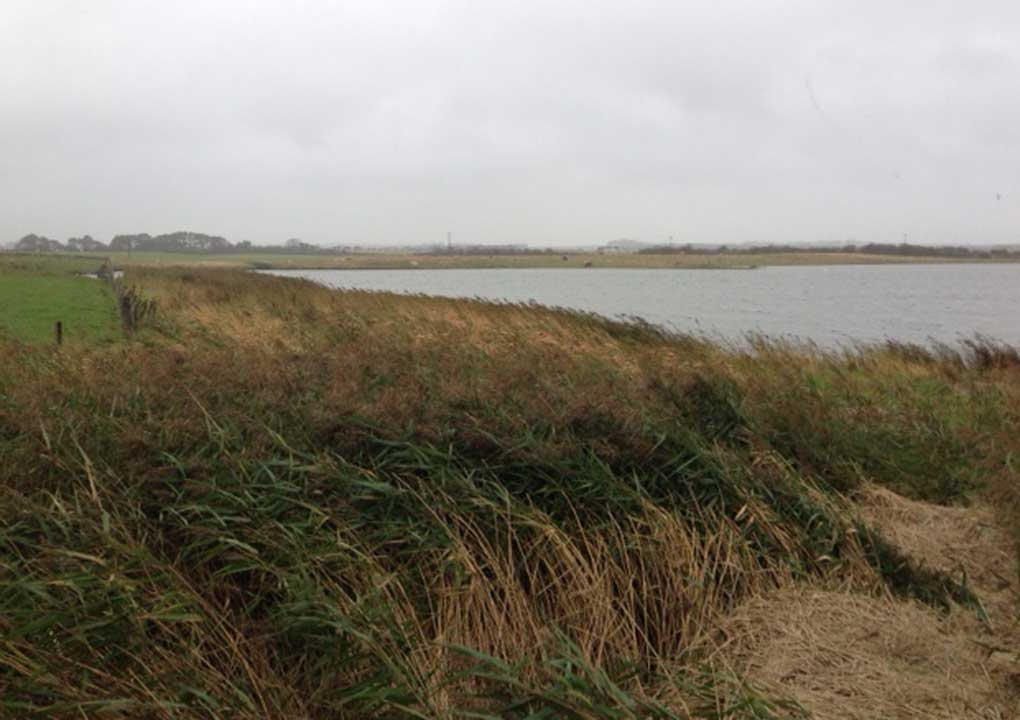 Cresswell Ponds