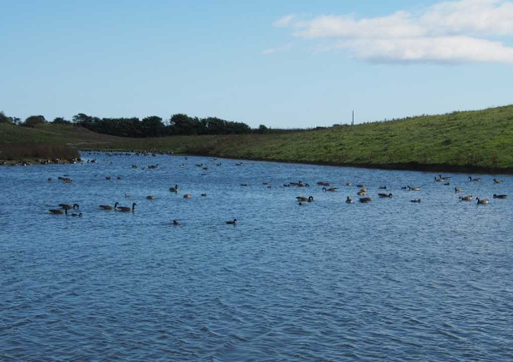 Hauxley Reserve