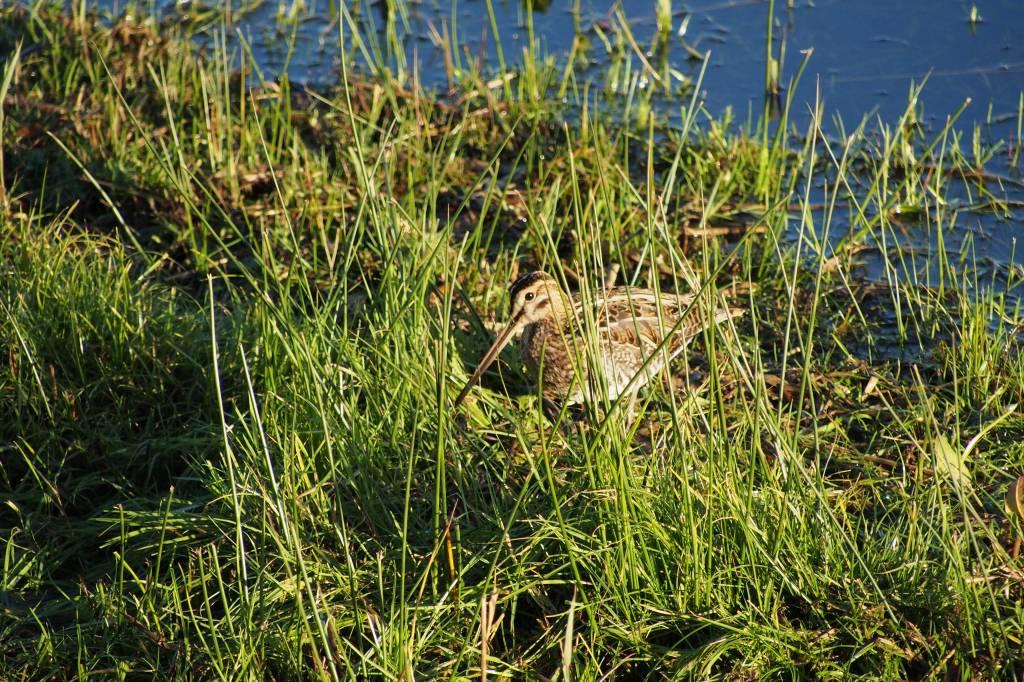 Leighton Moss RSPB reserve