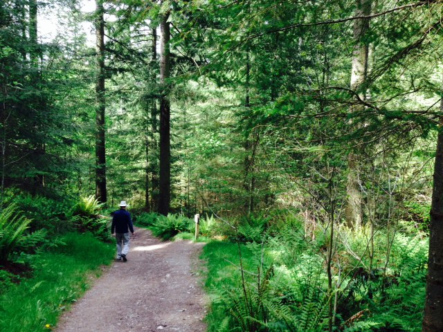 Dodd's Wood