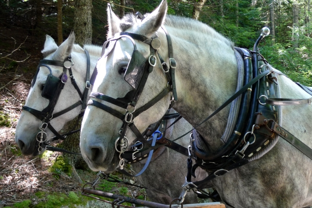 Carriage ride Acadia