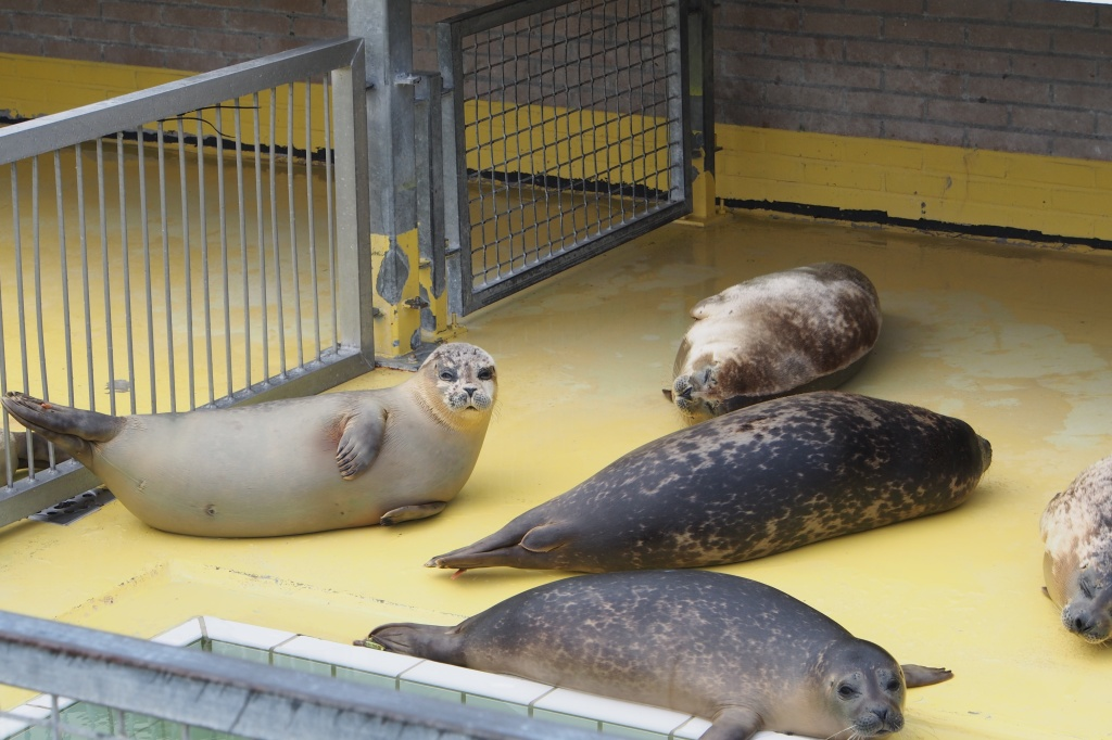 Pieterburen Seal Rehabilitation Centre Holland