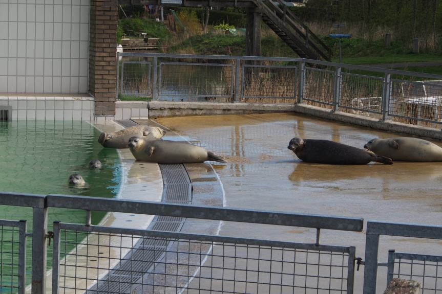 Pieterburen Seal Rehabilitation Centre Holland
