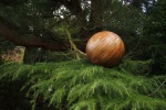 Colin Rose's Pine Ball
