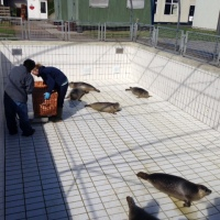 Seal Sanctuary on Holland's Coast