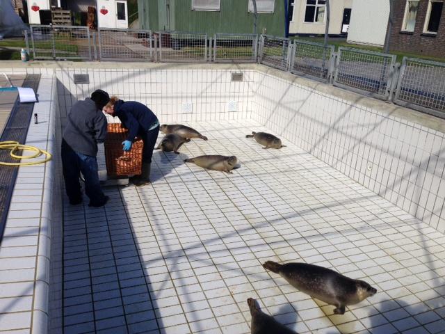 Pieterburen seal sanctuary