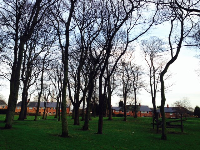 Newcastle High Heaton Spinney