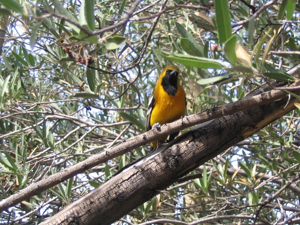 Bird life Arizona