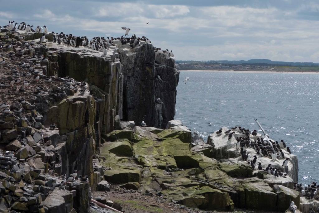 Clifftop views from the Farnes