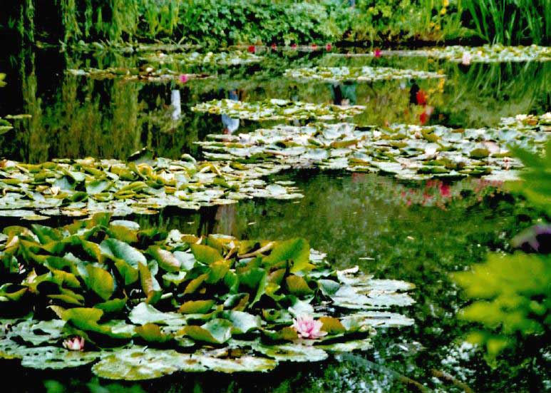 Monet's waterlilies at Giverny