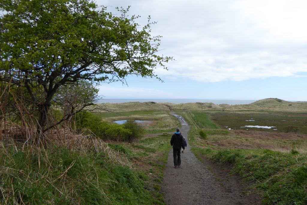 Warkworth golf course and Amble walk