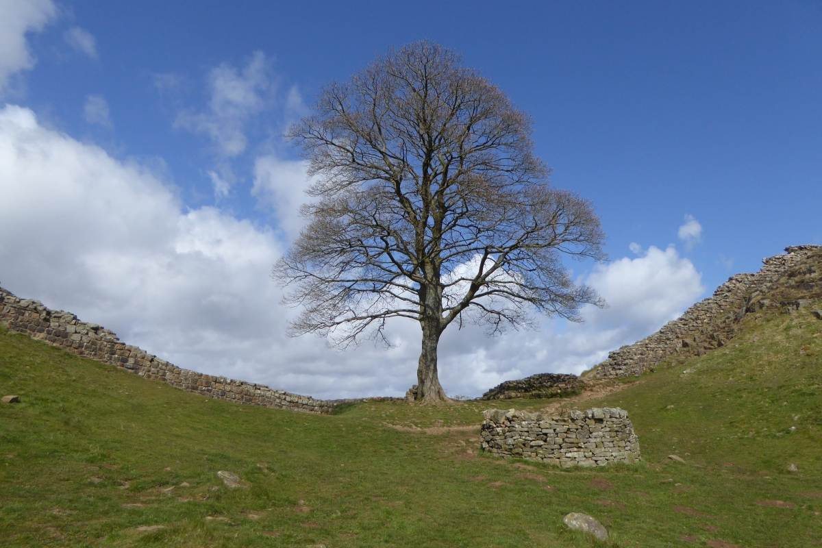 Hadrian's Wall - Walk with the Romans - Steel Rigg