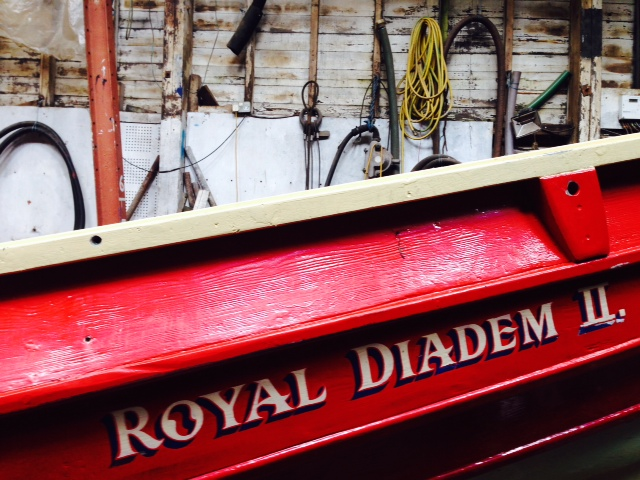 Royal Diadem in Fred's Shed
