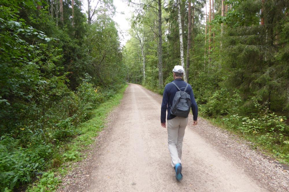 Latvia woodland Kemari