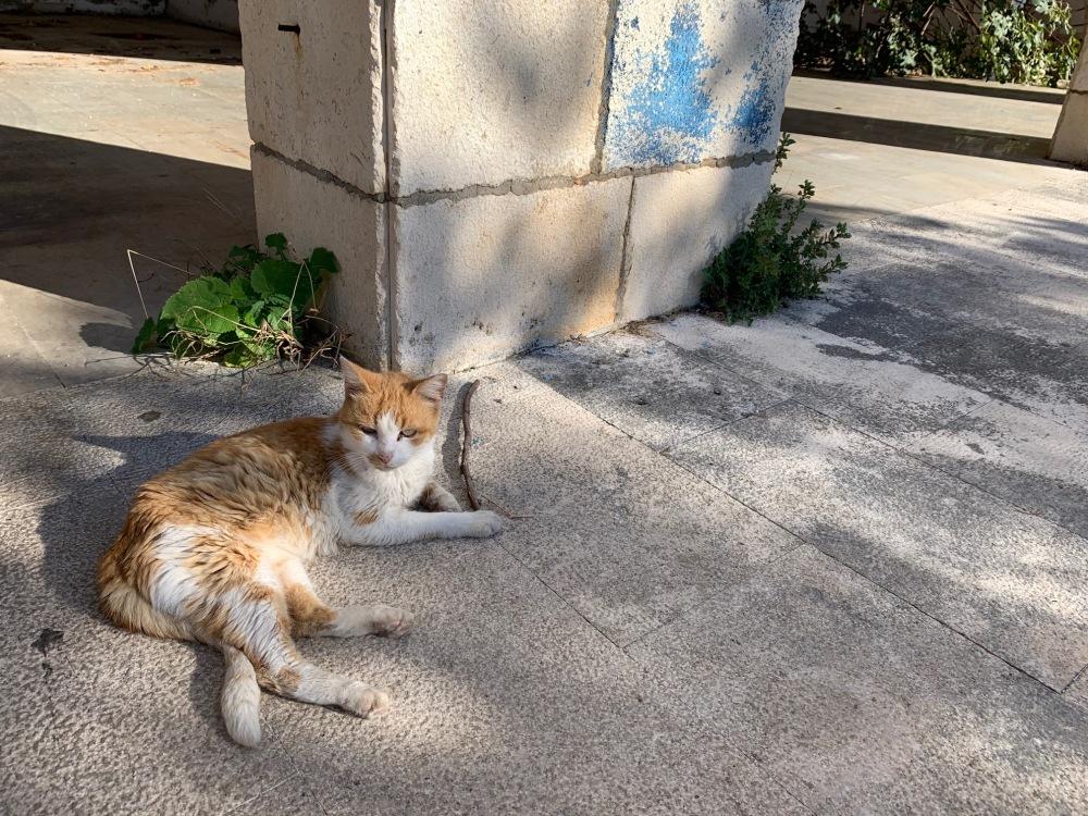 cat Hotel Belvedere Dubrovnik