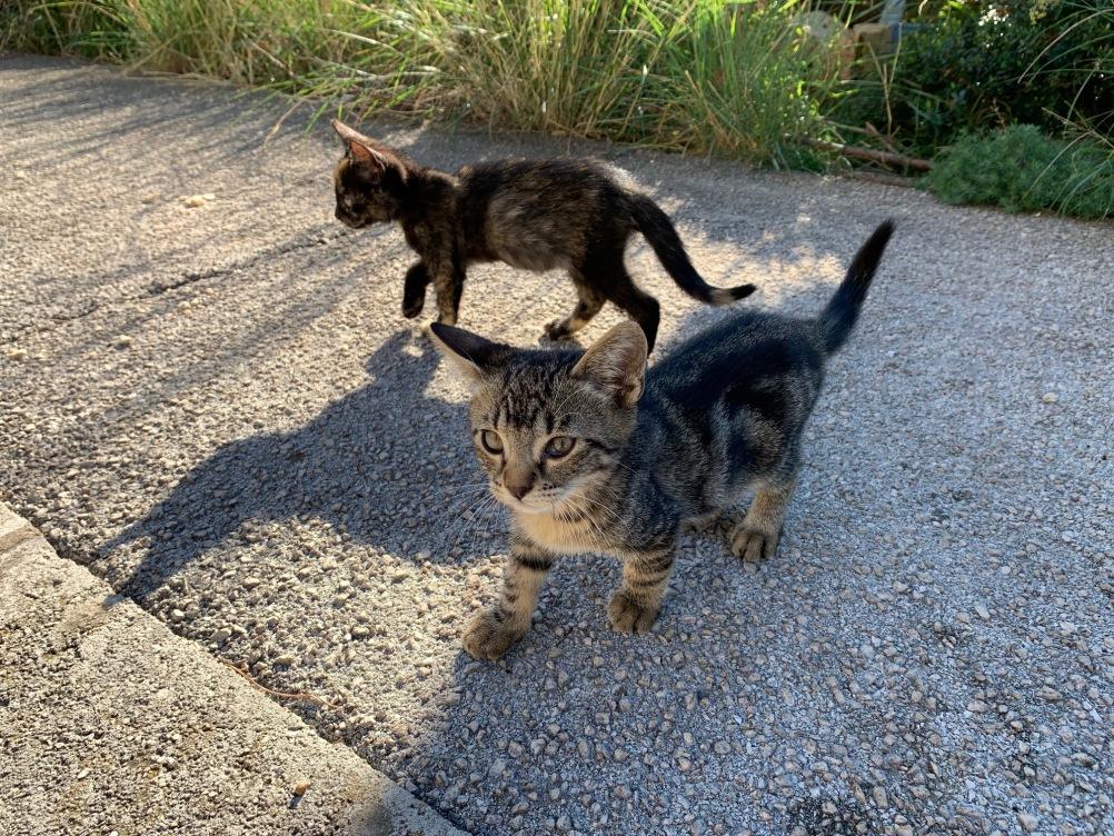 Hotel Belvedere Dubrovnik cats
