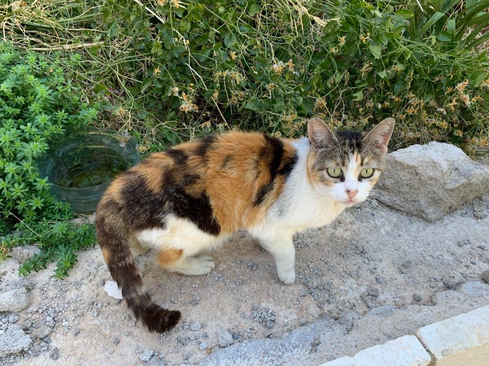 Hotel Belvedere Dubrovnik cat